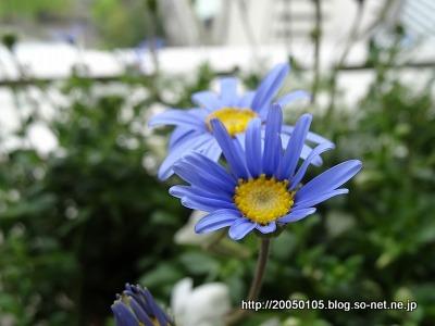 Photos: DSC09903