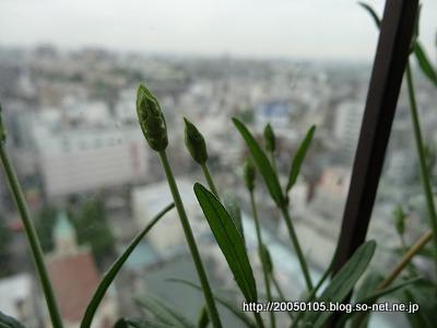 Photos: DSC09921