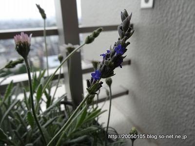 Photos: DSC00265