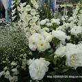 Photos: DSC00575