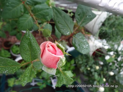 Photos: DSC00904