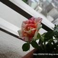 Photos: DSC01392