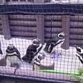 写真: 今日は須磨の水族館にいって...