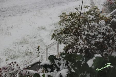 2012.12.1 雪景色