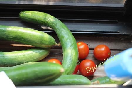 朝どりの野菜