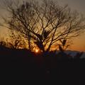 夕日に染まる木々
