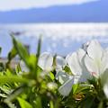 キラキラ琵琶湖