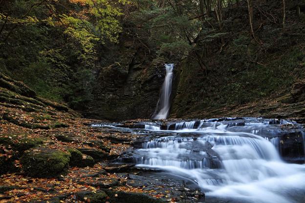Photos: 『去秋。。。』