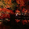 『浮かぶ秋。。。』