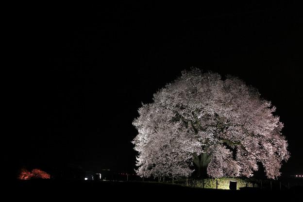 写真: 『暗香疎影』