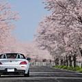 Photos: 『去春。。。』