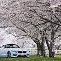 『桜花爛漫』