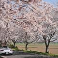 『桜梅桃季』