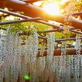 写真: 『初夏の夕暮れ。。。』 ~曼荼羅寺~