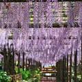 写真: 『初夏の訪れ』 ~天王川公園~