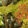 写真: 『秋へ。。。』