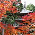 写真: 常楽寺 三重塔