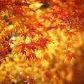 Photos: 『秋彩』