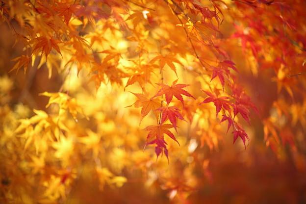 写真: 『秋染まる。。。』