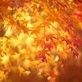 『秋染まる。。。』