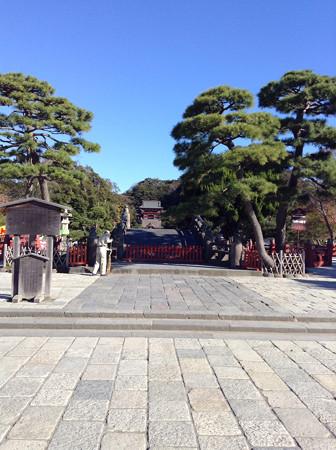 20131123鶴岡八幡宮(1)