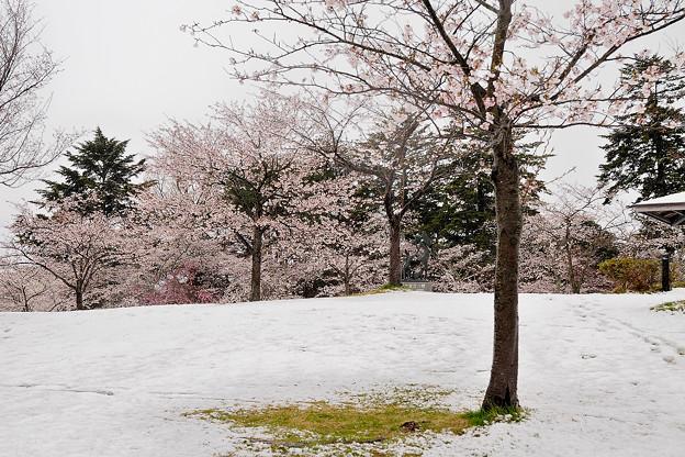 春雪・・?