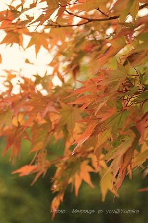 少し早い秋をみつけに