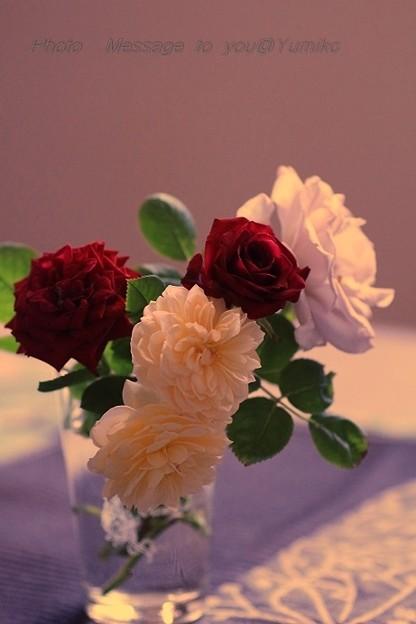 庭で咲いたバラ達