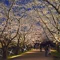 写真: 石田堤ライトアップ