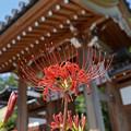 写真: 秋の常楽寺