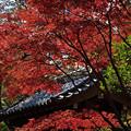 写真: 秋の平林寺