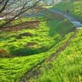Photos: 緑溢れる散歩道