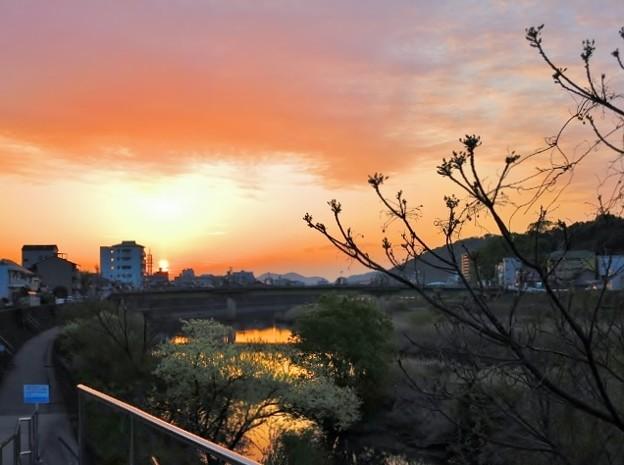 陽跡鏡川 ・50