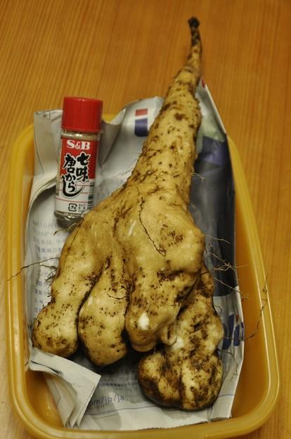 収穫(短形自然薯)