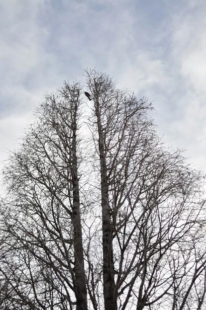 枯木と冬空
