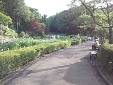 花菖蒲@薬師池公園