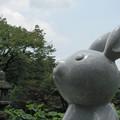 Photos: 三室戸寺_4