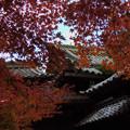 紅葉と屋根瓦