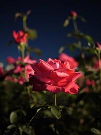 蘭:神代植物公園
