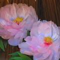 ピンク牡丹4