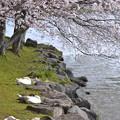 Photos: 春のうたたね