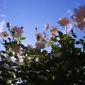 Photos: 小さな太陽