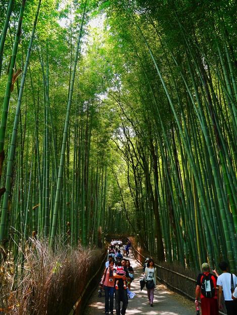 嵐山の竹林の小径