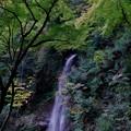 写真: 森の名水