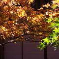 写真: 秋の中庭