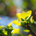 Photos: 春の陽射し