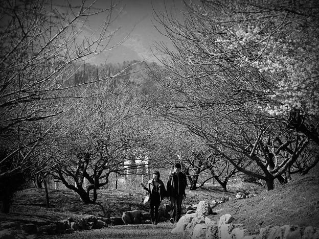 Photos: 春寒料峭