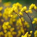 Photos: 春風揺れて