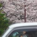 桜咲く街角で