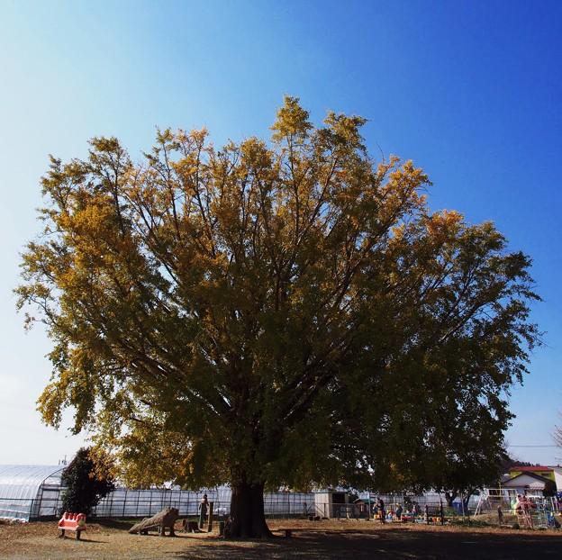 この木何の木気になる木